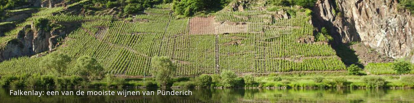 Marienburg-wijngaard